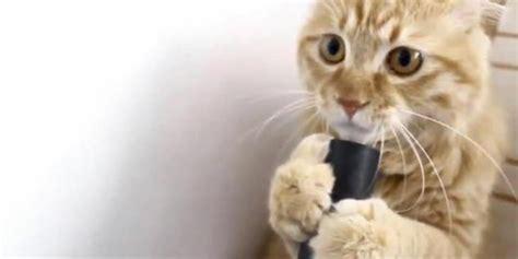 Vacuum Cleaner Di Jawa Timur lucunya lidah kucing ini tersedot vacuum cleaner