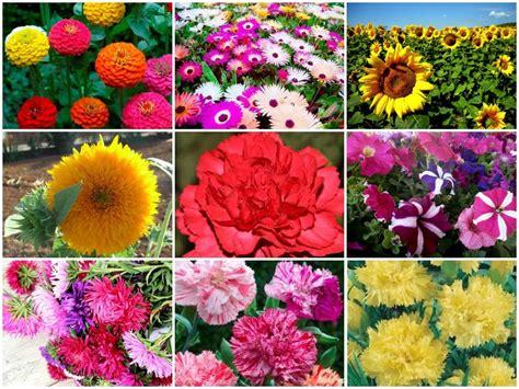 imagenes de flores de cempasúchil kit 20 000 sementes de flores diversas v 225 rias cores 20