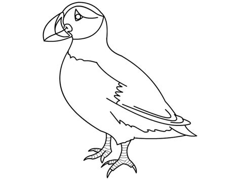 puffin bird coloring page 43 best images about my compassion puffin on pinterest