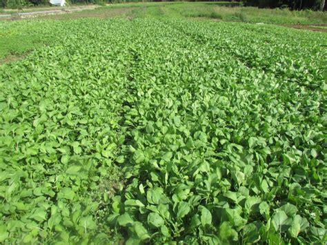 lahan kosong  kupang  tanaman hortikultura kompasid