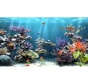 Fish Tank  Best Images Collections HD For Gadget Windows