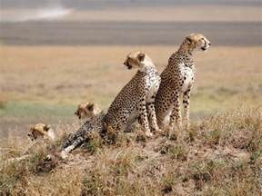 serengeti national park jenman african safaris