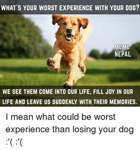 What S Meme Mean - what s your worst experience with your dog meme nepal we