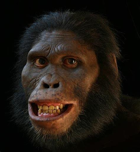 africanus el hijo del hominidevolution a africanus