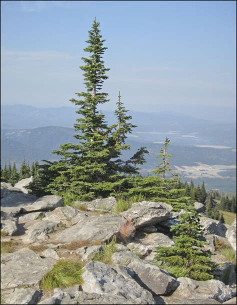 Alpine Trees - alpine trees landscape rural photos don slackwater