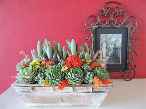 succulent centerpieces for sale kalonchoe tomentosa centerpiece san diego succulents