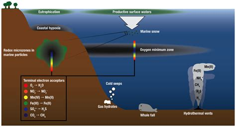 ph floor meaning frontiers the microbiology of sea hydrothermal vent