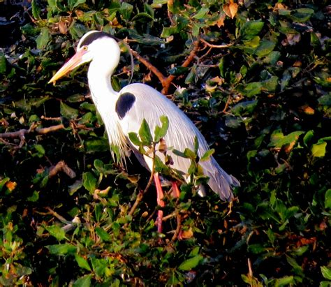file vedanthangal bird sanctuary 14 jpg wikimedia commons