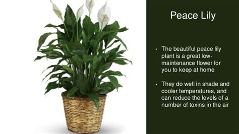 house plants that don t need light 10 plants that you need for your house