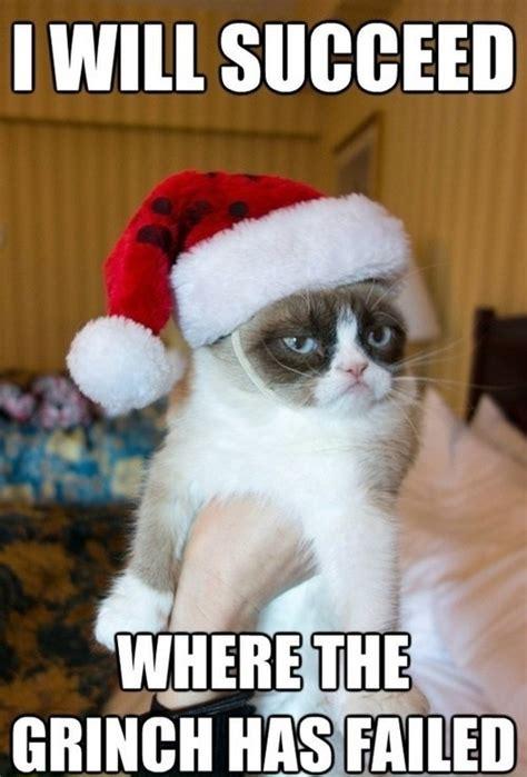 christmas cat memes top 25 grumpy cat memes cattime