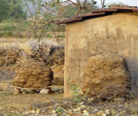 cow poop house india travellerspoint travel photography dhani village rajasthan india travel photos by galen r