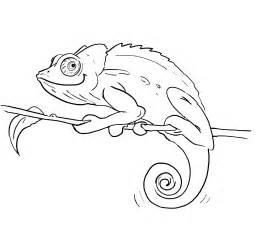 chamaeleon sw jpg 1920 215 1829 zeichnen pinterest