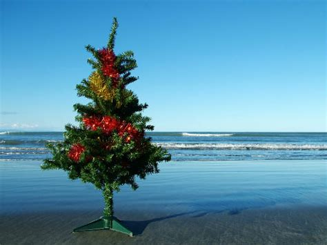 images of christmas in new zealand the pohutukawa tree life s a pumpkin