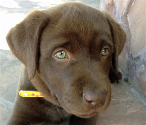 puppies with green breeds with green