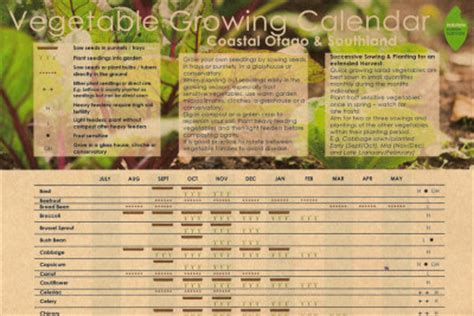 Calendar When To Plant Vegetables Vegetable Growing Calendar For Coastal Otago Southland