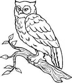 coloring pages owls owl coloring pages coloring lab