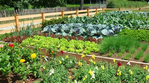 Image Gallery Large Vegetable Garden Design Large Vegetable Garden Layout