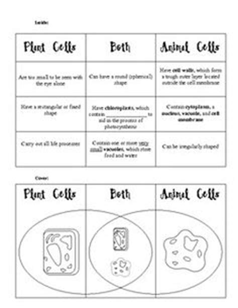 Comparing Plant And Animal Cells Worksheet Answers by Parts Of A Plant Cell Science Vocabulary Worksheet