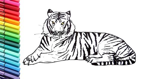 tiger color drawing and coloring a tiger how to draw animals