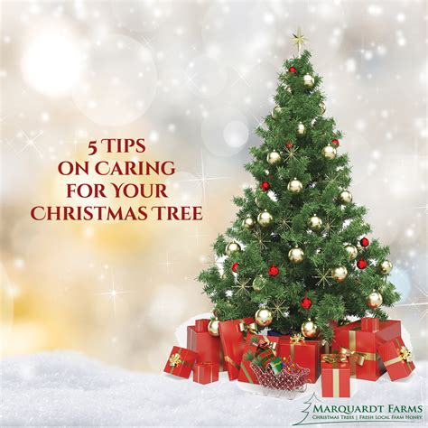 5 tips on caring for your christmas tree marquardt farms