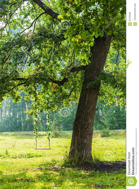 swing hanging from tree swing on a tree stock photo image 57076269
