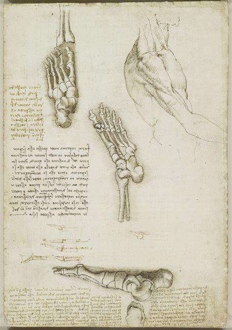 tavole di anatomia umana scheletro piede scheletro e muscoli braccio