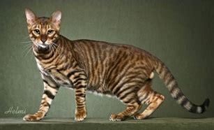 alimentazione gatta sterilizzata gatta con piccoli problemi di vomito