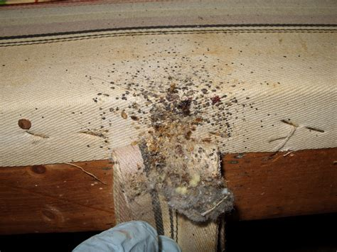 do bed bugs stay on you do this to stop spreading your bed bug infestation