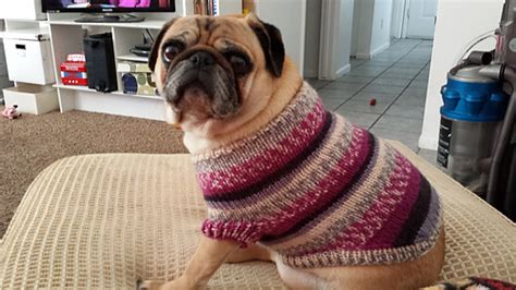 pug jumper knitting pattern ravelry pug sweater pattern by angelcatkins elizabeth watkins designs