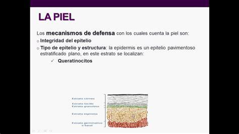 imagenes de barreras naturales introducci 243 n a la inmunolog 237 a humana clase 2 inmunidad