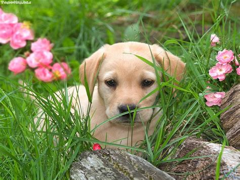 free of with dogs free wallpaper with dogs wallpapersafari