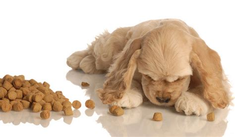 vet recommended puppy food best food for cocker spaniels 8 vet recommended brands
