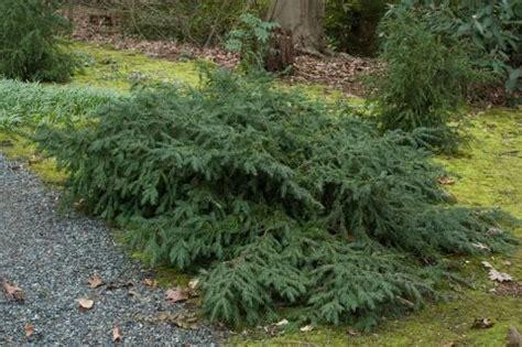 Garten Modern 5168 by Best 20 Taxus Baccata Ideas On Garten