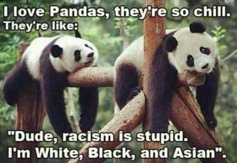 Panda Meme - funny panda bears bears beards pinterest cas funny
