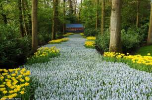 Most Beautiful Flower Garden In The World Seven Million Bulbs Bloom To The Beginning Of In The World S Largest Flower Garden