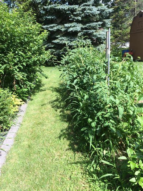 Vegetable Garden Vegetable Garden Forum