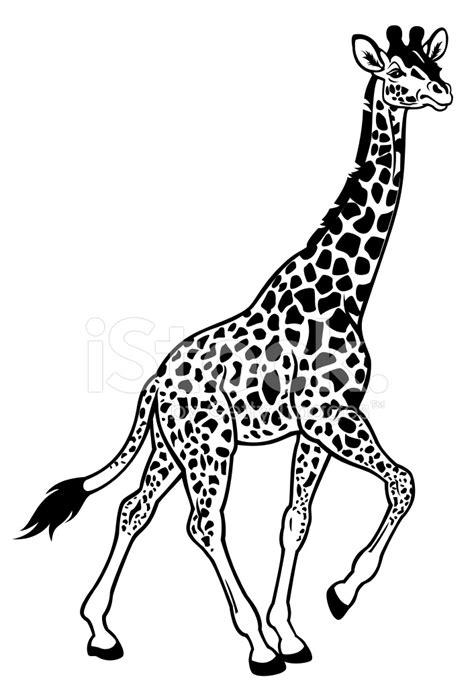 imagenes de jirafas blanco y negro giraffe black white stock vector freeimages com