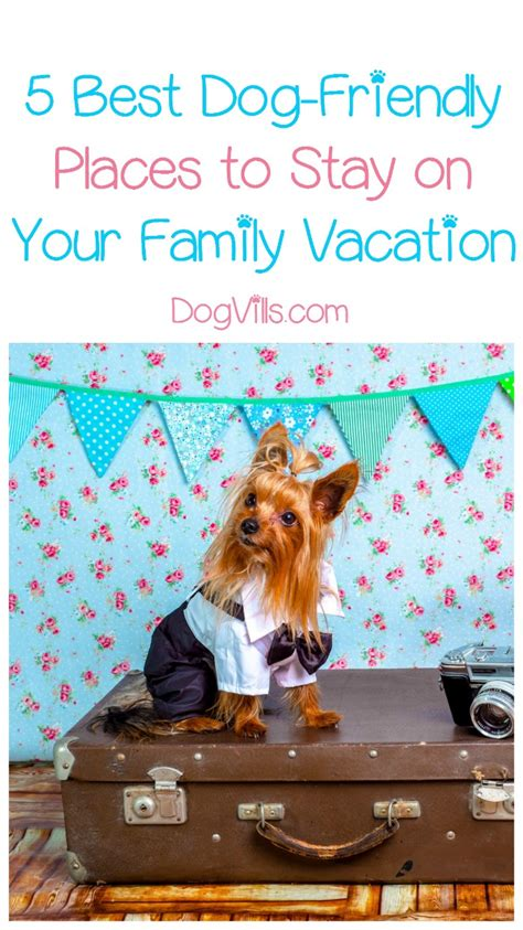 places that allow dogs 5 friendly places to stay when traveling with your