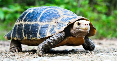 vedere mosche volanti cause come tenere una tartaruga di terra in casa 28 images