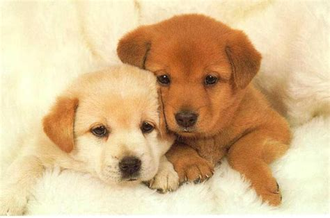 10 most popular puppy names of 2012 investorplace