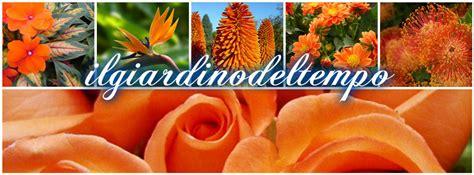 fiori arancioni linguaggio dei fiori di colore arancione il giardino