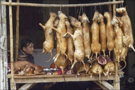 do koreans eat do restaurants use dead dogs as a delicacy for you to eat