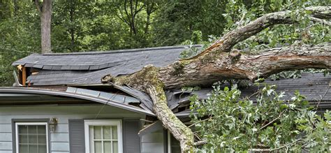 home insurance trees close to house tree fell on house insurance 28 images my tree fell on my s property my insurance