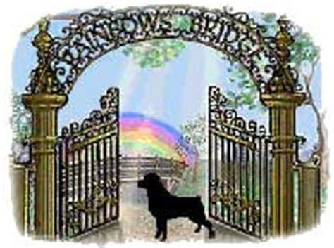 seizures in rottweilers rainbow bridge sm 187 2infinity rottweilers