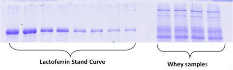 Curve Whey Protein sds page analysis of food or nutritional products