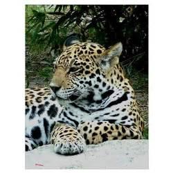 How Can We Help Jaguars Jaguar Portrait Poster