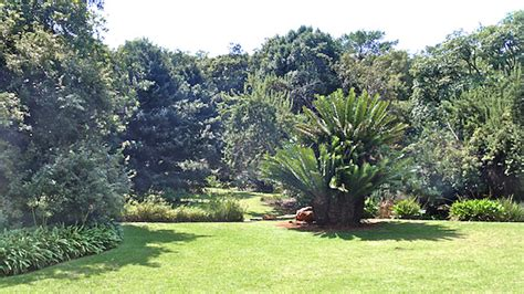 Botanical Gardens Pretoria Pretoria Botanical Garden Nightjar Travel