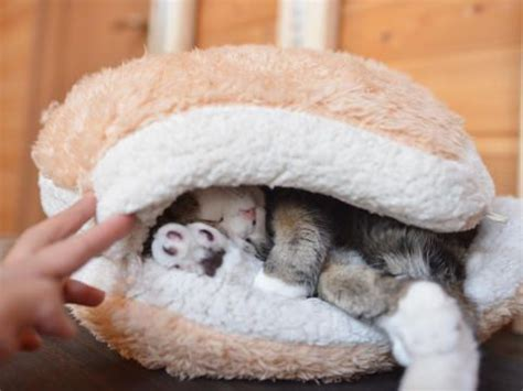cat macaron bed 17 best images about a home without an animal is just a