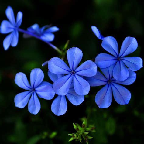 blue purple flowers ipad air wallpaper  iphone