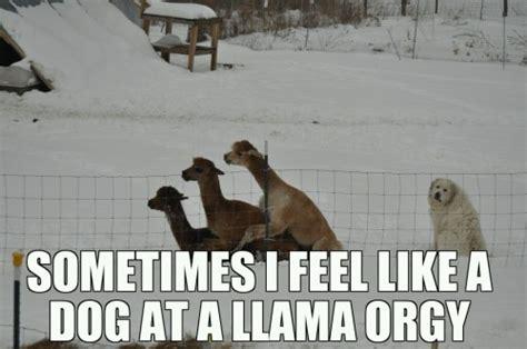 Doge Sex Meme - llama orgy joke overflow joke archive
